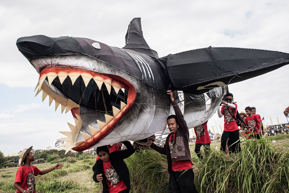 . Participants carry a shark shaped kite during the Bali Kite Festival on July 26, 2013 in Denpasar, Bali, Indonesia. The event is a seasonal religious festival, which is intended to send a message to Hindu Gods to create abundant harvests and crops. Aproximately 1121 traditional kites are flown during the three day annual Festival.  (Photo by Putu Sayoga/Getty Images)