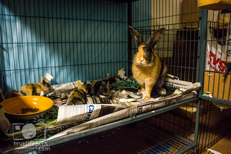 August 16, 2016 12 day old kits visit Daddy Bunny (3).jpg