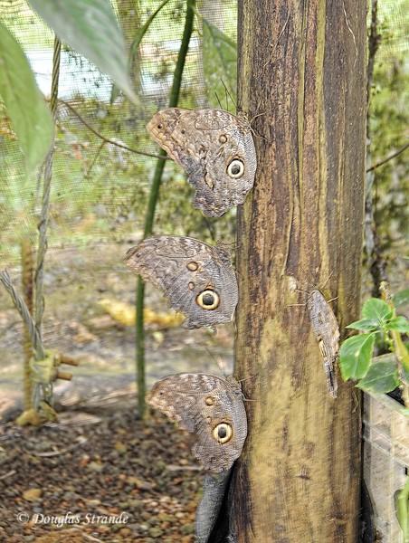 Cano Negro: Butterfly farm