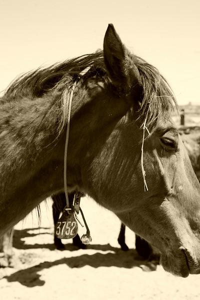 "Lifesavers Wild Horse Rescue ~Saving The 3 Strikes Mustangs "" Day 1"