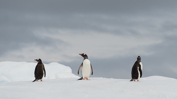 Antarctique2014