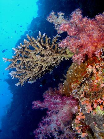 Palau 2009