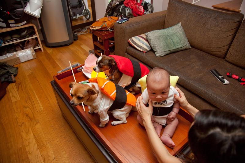 Dog-sushi-halloween-71.jpg