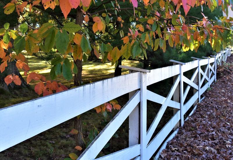 Fall Fences.JPG