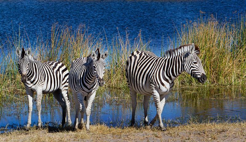 Botswana-20110715-2619-Edit.jpg