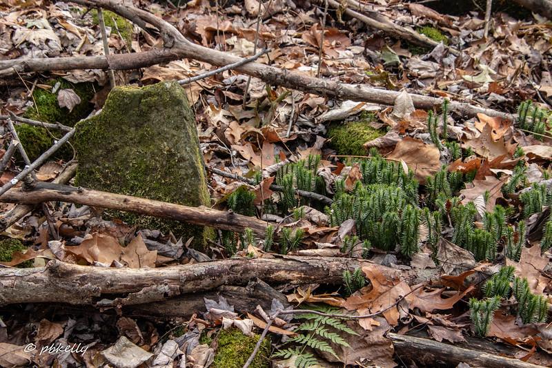 mini trees 113019.jpg