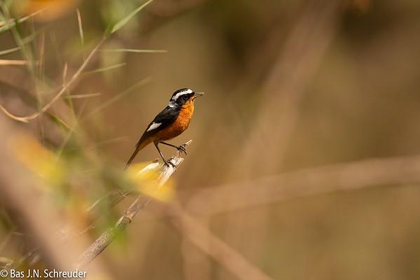 Maghreb birds