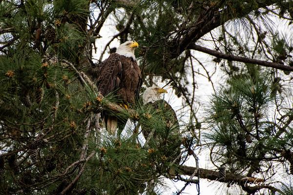 Eagle Date night