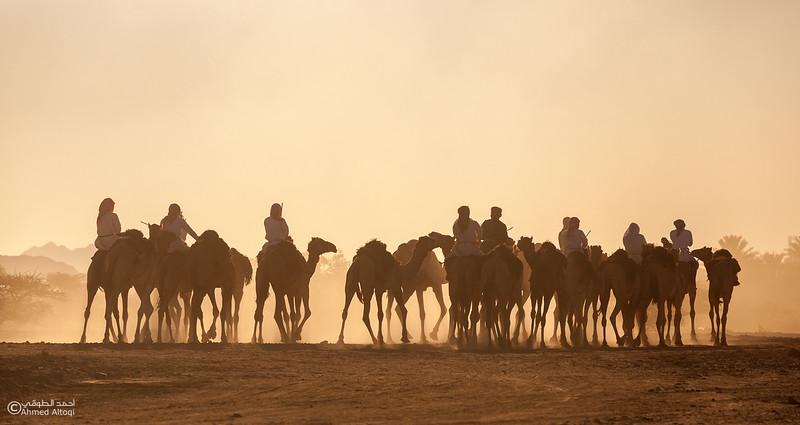 IMG_1233- Camel Race.jpg