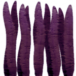 cave 17