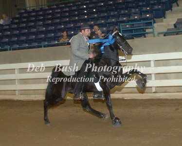 CLASS 19  TWO YR OLD OPEN MARES AND GELDINGS RC