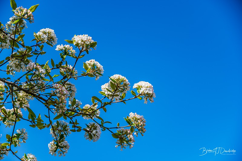 Spring blossom-2108.jpg