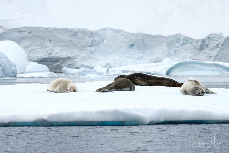 icebergs_pleneau_island_lemaire_20130106_7837.jpg