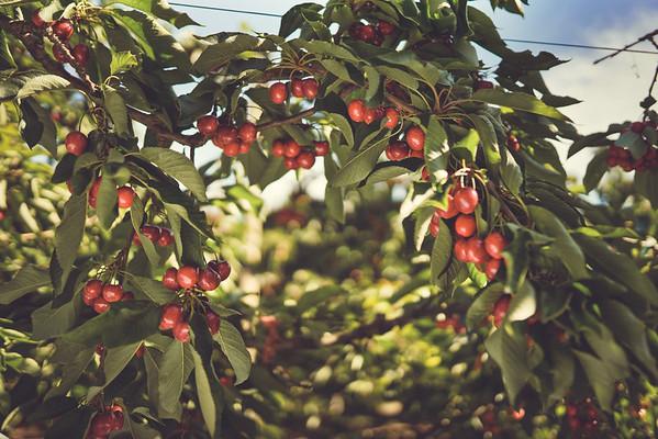 CMI Orchards