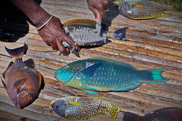 Repas de poissons
