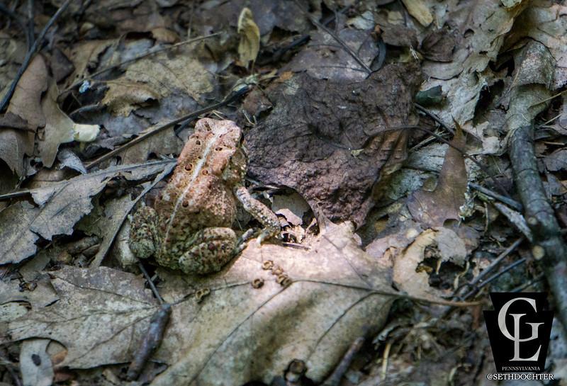 middlecreek - toad in sunlight (p).jpg