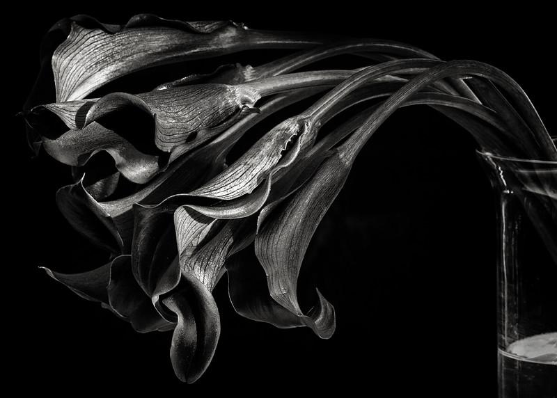 black-callas.jpg