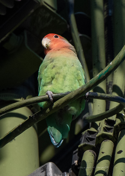 Perched on the cables