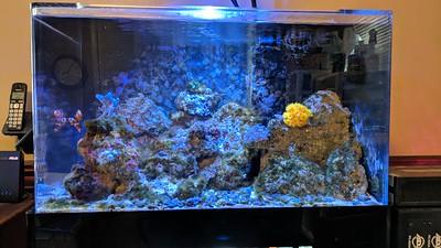 2018-09-01 - Reef tank update