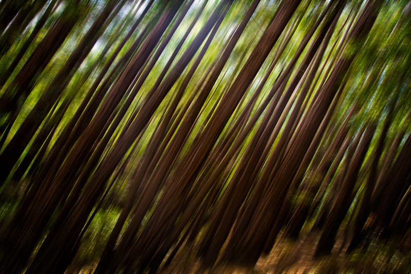 Forest in the Redwoods - Blur-.jpg