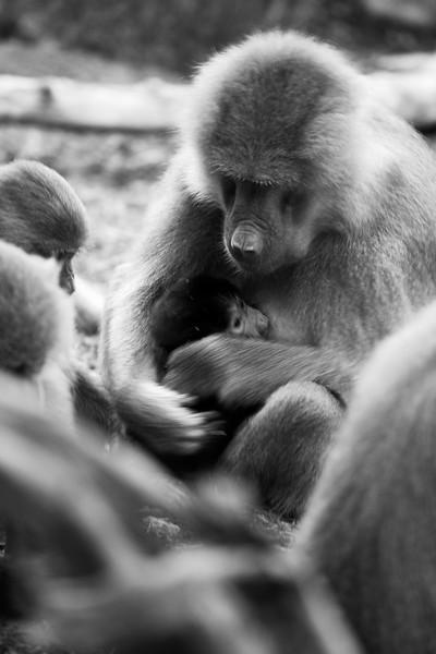NC Zoo_51013075.jpg