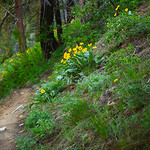 Icicle Ridge 5.26.17