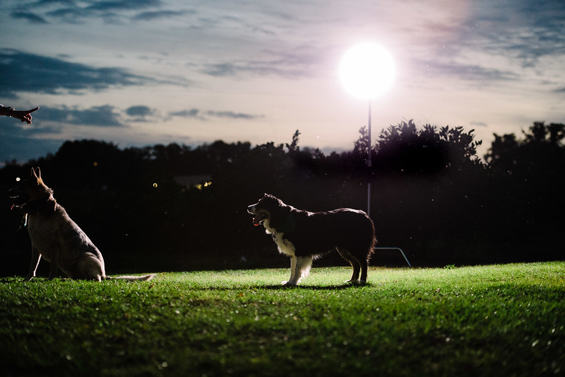 Tori & David dogs (8 of 10).jpg