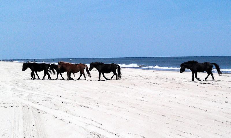 Outer Banks Corolla (167).jpg