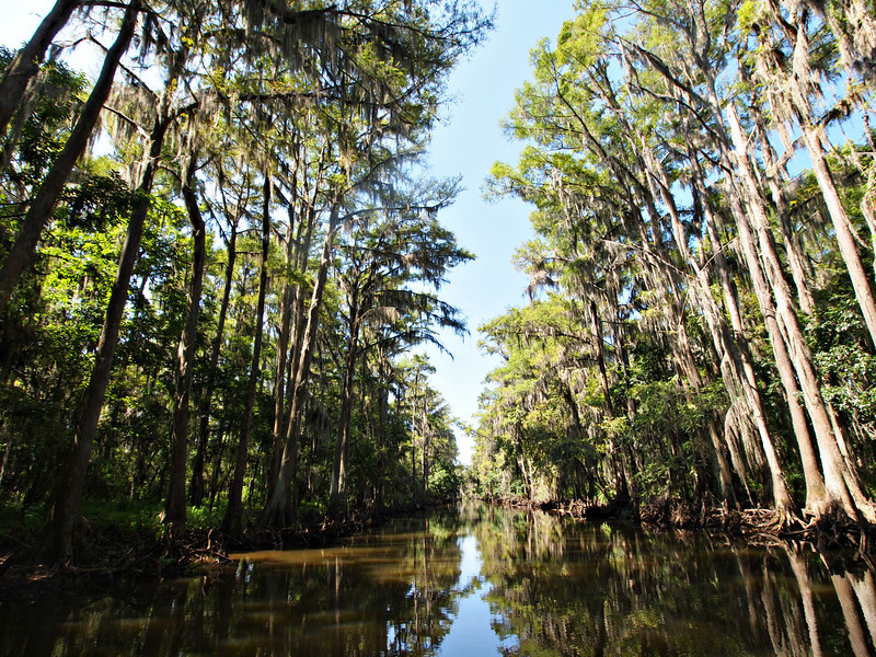 Caddo Lake Boat Road