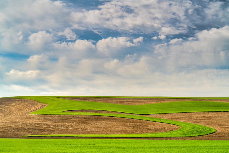 Plowed Fields