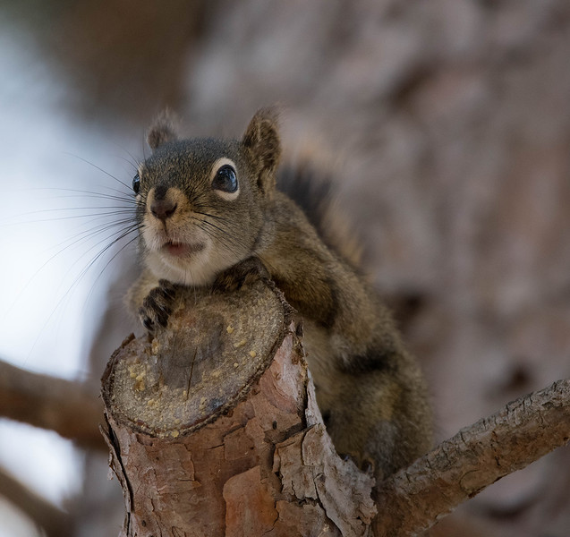 Squirrel April 2016 4.jpg