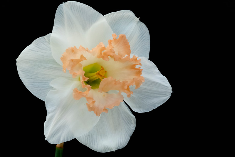 Flower032720-113.jpg
