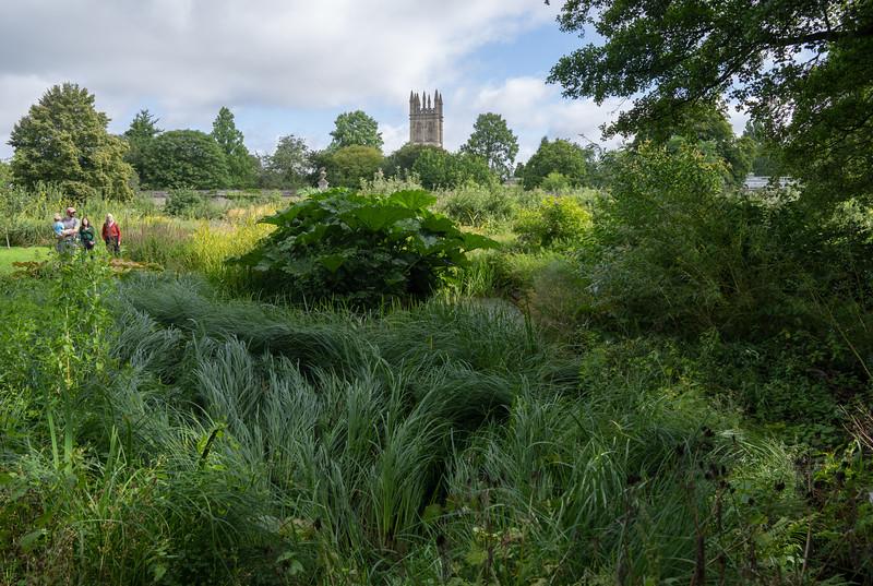 Oxford Botanic Garden (Aug 2021)