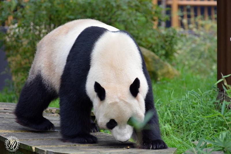 20180909 Ouwehands dierenpark GVW_8657.jpg