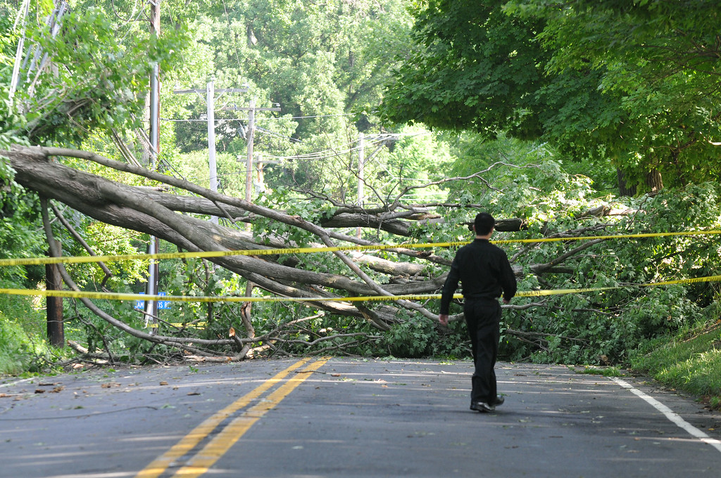 . A man walks around a downed tree on Sproul Road in Villanova. Two downed trees have the road closed between Bryn Mawr Ave. and Conestoga Rd. Photo Pete Bannan