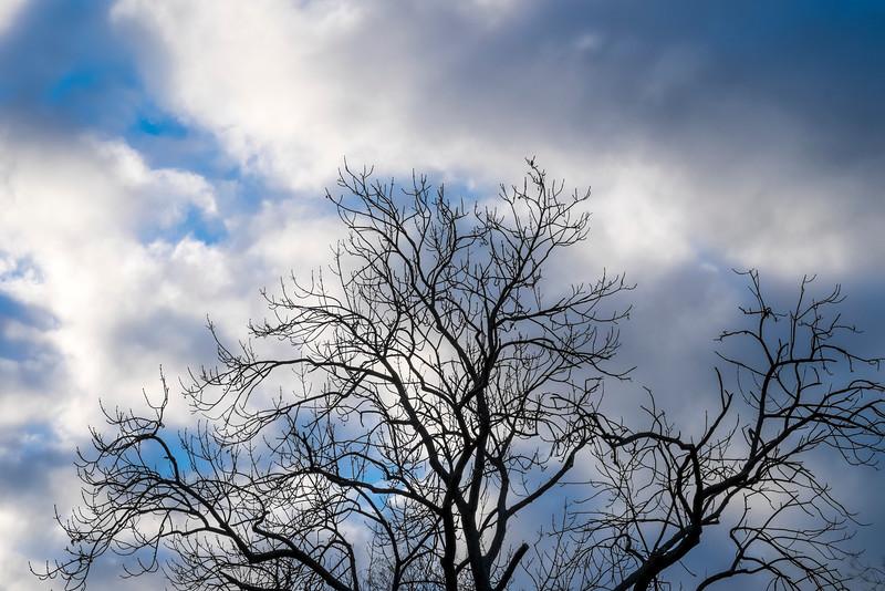 tree-038.jpg