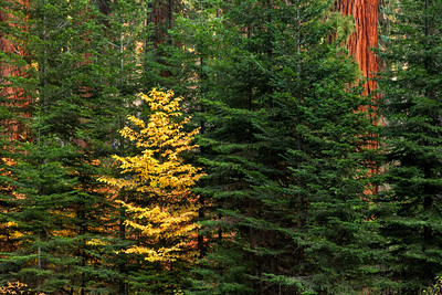Sequoia / Kings Canyon (2018-11-02)