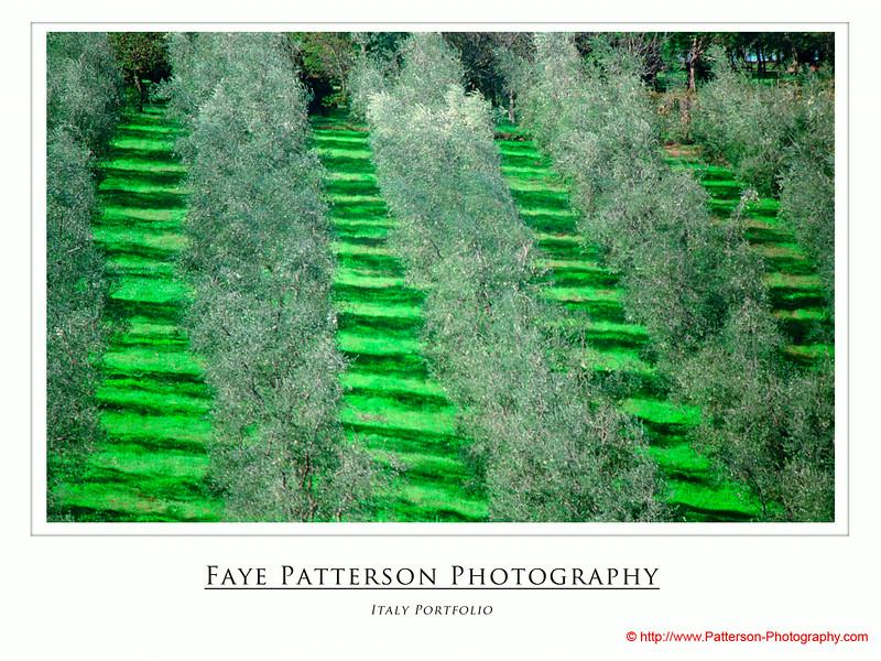 frame - faye.jpg