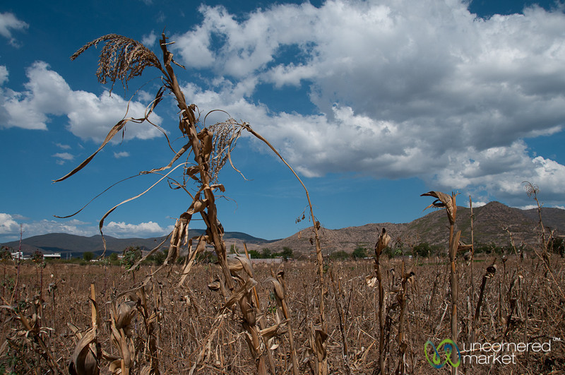 Dried Agricultural Fields near San Martin Tilcajete, Mexico