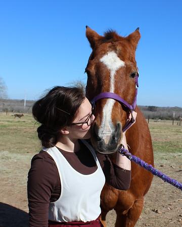 Sunshine and horses