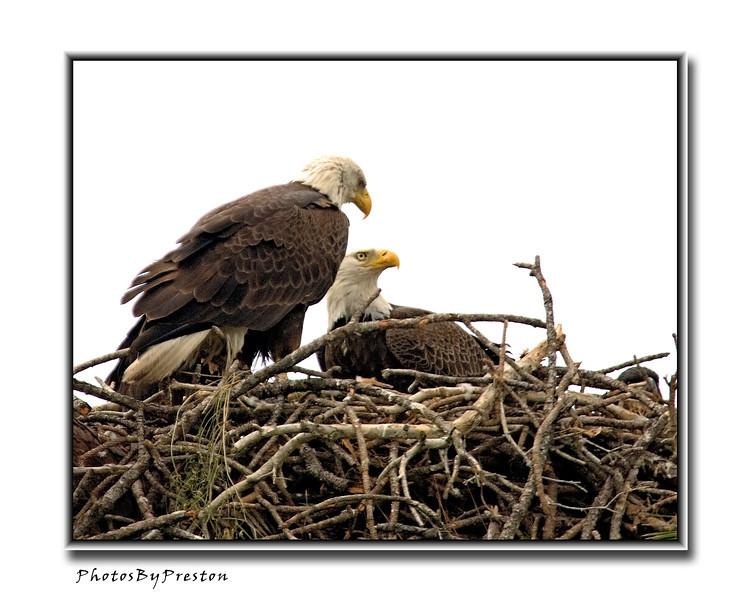 eaglesproudparentsgeographic.jpg