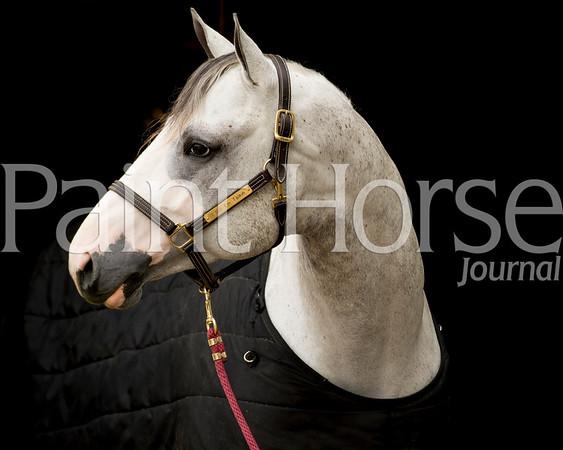 2015 APHA Convention Stallion Farm Tour
