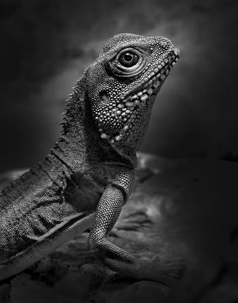 an06-S18–animal–1.jpg