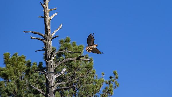 Stoneman Lake Area 07 9&10-2020 AZ