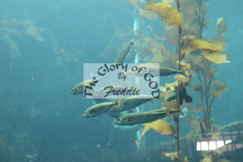 Aquarium 20144.jpg