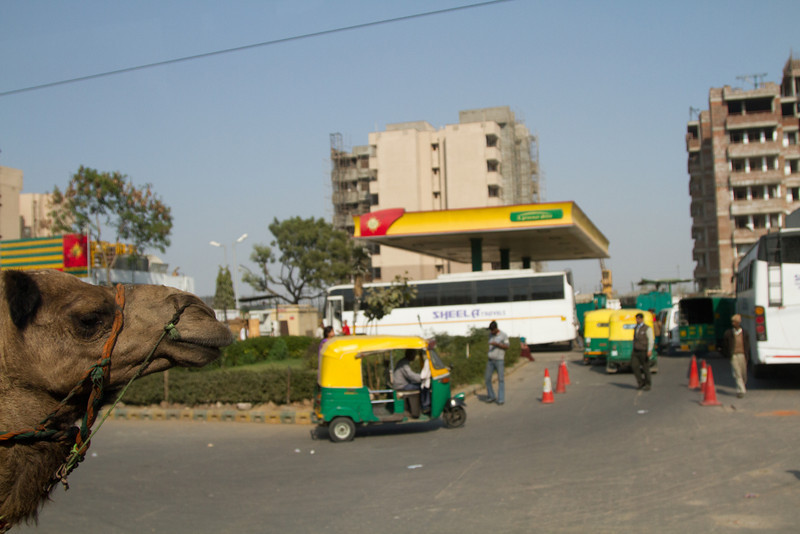 India_2012Feb-5469.jpg