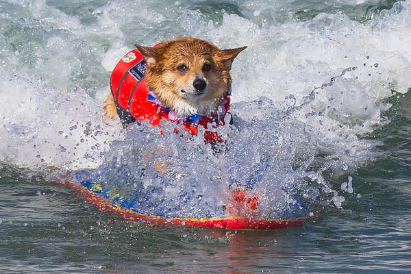 Purina Pro Plan incredible Dog Challenge Huntington Beach 06 09 and 10 2017