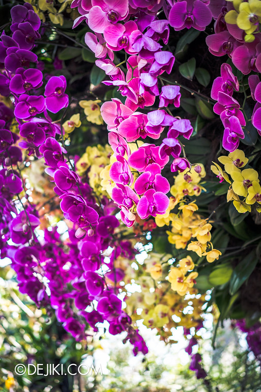 Gardens by the Bay - Orchid Extravaganza 2016 - orchid closeup