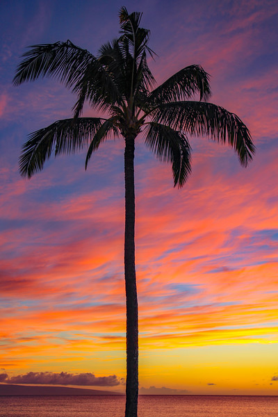 Palm Tree Sunset, Maui