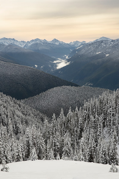 hurricane ridge 1.jpg